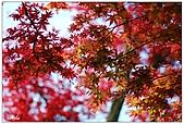 台北奧萬大楓紅了:14.jpg