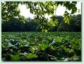 2012台北植物園即景:01.jpg