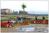 宜蘭銀柳節花海:DSC_2380.jpg