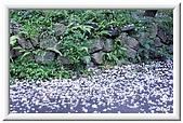 新竹桐花薰衣草之旅:J 122.jpg