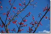 2008 陽明山花季 (1):DSC_0818.jpg