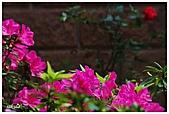 中庭裏的花開了!!:06.jpg