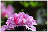 中庭裏的花開了!!:07.jpg