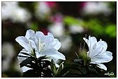 中庭裏的花開了!!:08.jpg