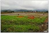 宜蘭銀柳節花海:DSC_2384.jpg