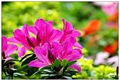 中庭裏的花開了!!:09.jpg