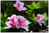 中庭裏的花開了!!:10.jpg