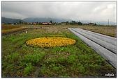 宜蘭銀柳節花海:DSC_2385.jpg