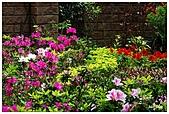 中庭裏的花開了!!:11.jpg