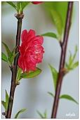 中庭裏的花開了!!:12.jpg