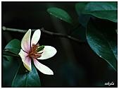 中庭裏的花開了!!:13.jpg
