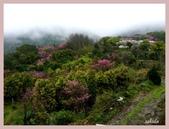 2013陽明山花季:P1050129.jpg