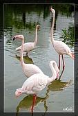 木柵動物園一遊:DSC_2704.jpg
