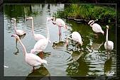 木柵動物園一遊:DSC_2701.jpg