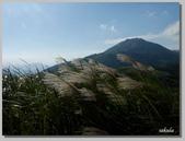 2012擎天崗芒花:b 066.jpg