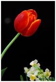 花卉來迎春:DSC_1180.jpg