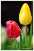 花卉來迎春:DSC_1197.jpg