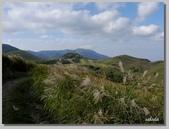 2012擎天崗芒花:b 070.jpg