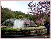 2013陽明山花季:P1050132.jpg