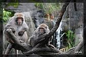 木柵動物園一遊:DSC_2722.jpg
