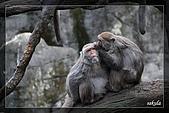 木柵動物園一遊:DSC_2723.jpg