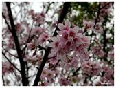 吉野櫻花季:T 015.jpg