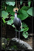 木柵動物園一遊:DSC_2751.jpg