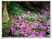 2016 櫻花季:16.jpg
