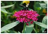 花卉隨手拍:DSC_5364.jpg