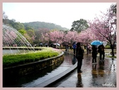 2013陽明山花季:P1050134.jpg