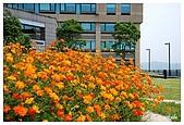 花卉隨手拍:DSC_5375.jpg