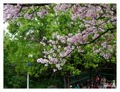 吉野櫻花季:T 084.jpg
