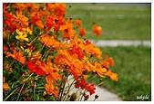 花卉隨手拍:DSC_5376.jpg