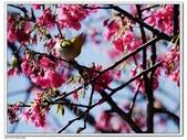 2016 櫻花季:20.jpg