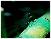 陽明山蝴蝶季:07.jpg