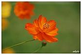 花卉隨手拍:DSC_5382.jpg