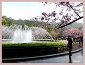 2013陽明山花季:P1050135.jpg