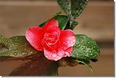 雨茶:DSC_0319.jpg