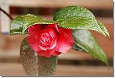 雨茶:DSC_0320.jpg