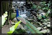 木柵動物園一遊:DSC_2755.jpg