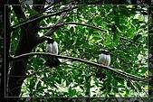 木柵動物園一遊:DSC_2760.jpg