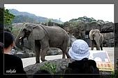 木柵動物園一遊:DSC_2771.jpg