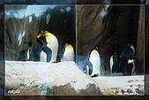 木柵動物園一遊:DSC_2778.jpg