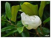 花卉隨手拍:DSC_5401.jpg