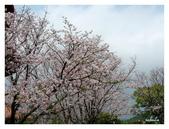 吉野櫻花季:T 119.jpg