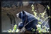 木柵動物園一遊:DSC_2786.jpg