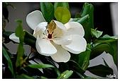 花卉隨手拍:DSC_5403.jpg