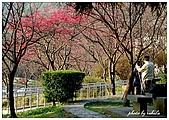 誰說台北沒有楓紅:DSC_0065.jpg