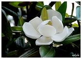 花卉隨手拍:DSC_5406.jpg