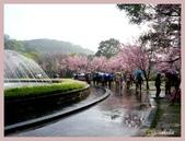 2013陽明山花季:P1050142.jpg